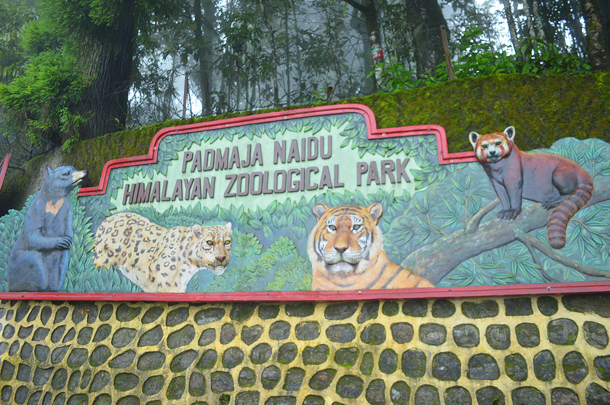 padma-naidu-zoological-park-and-mountaineering-institute