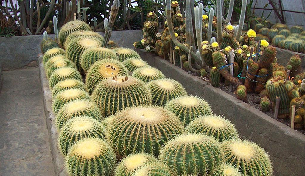 pine-view-nursery-kalimpong