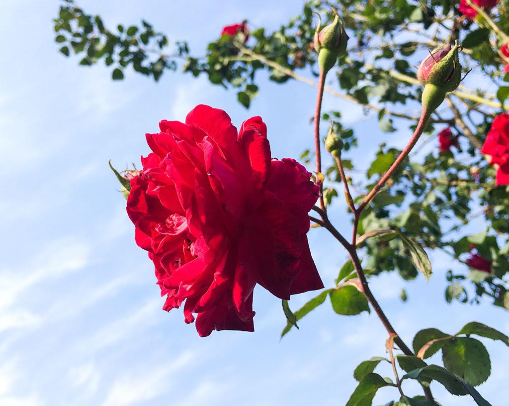 rose-garden-chandigarh