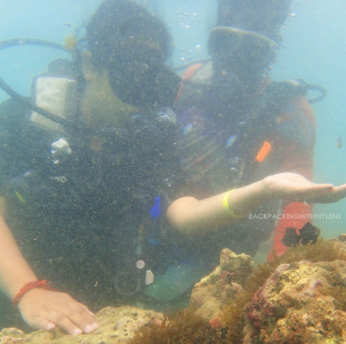 scuba-diving-northbay-island