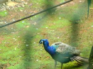 lady-hydari-park-zoo
