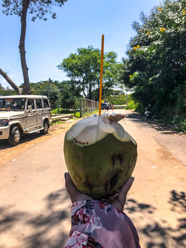 coconut-water-mysore