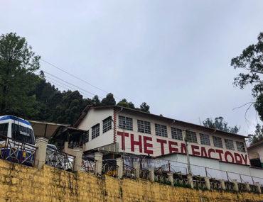 dodabetta-tea-factory (2)