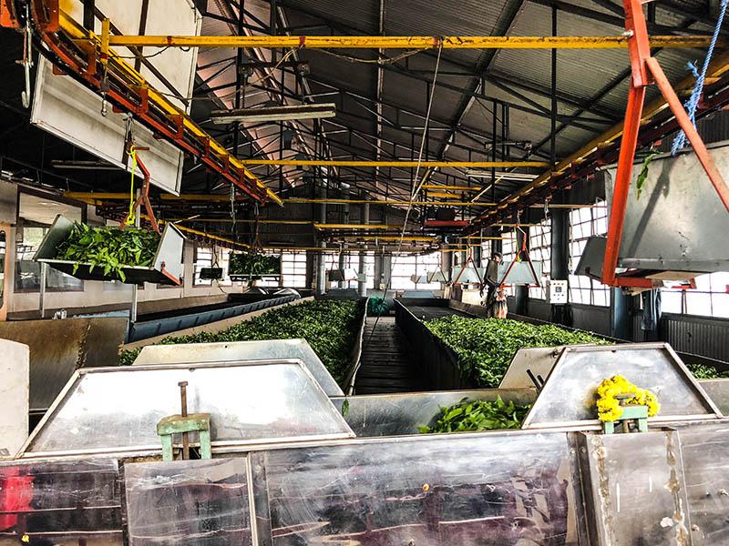 inside-of-dodabetta-tea-factory (9)