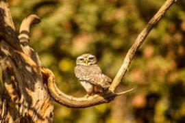 basics-of-wildlife-photography