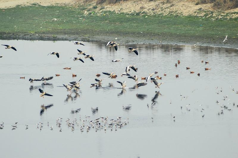 yamuna-river-agra
